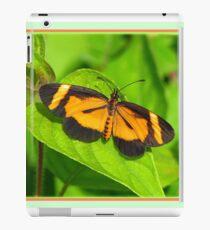 Heloconius Butterfly iPad Case/Skin