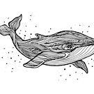 Hand zeichnen Wal von Elsbet