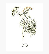 Dill Herb, Dill Plant, Dill Print, Dill Art Print Photographic Print