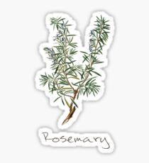 Rosemary Herb, Rosemary Plant, Rosemary Print, Rosemary Art Print Sticker