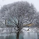 Snow-covered willow in the park by Marina Sterina