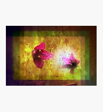 marriage of Titania; Salmon berry floral duet Photographic Print