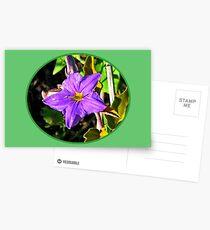 Purple Flower Postcards