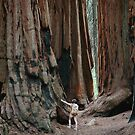 Giant Sequoias at Sequoia National Park  by Hotaik  Sung