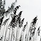 Beach reeds black and white by HEVIFineart