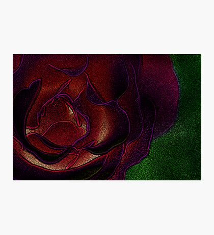 Rose, for you... Photographic Print