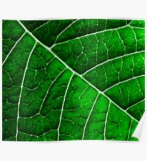 LEAF STRUCTURE GREENERY no3 Poster