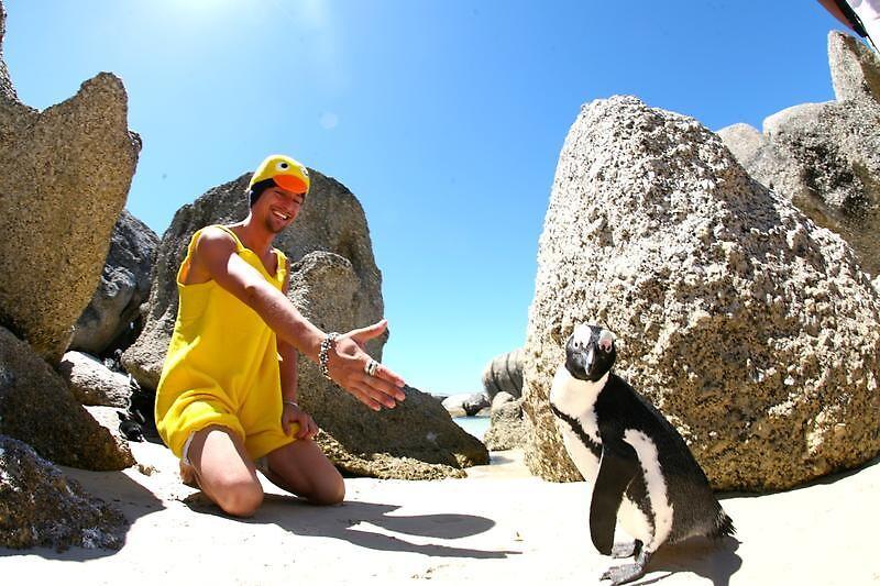 Penguin by Kristian Schmidt