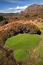Cushion Plants below Mt Jerusalem, Tasmania, Australia by Michael Boniwell