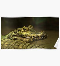 Alligator Teeth Poster