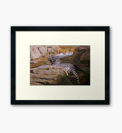 Bathing Beauty Framed Print