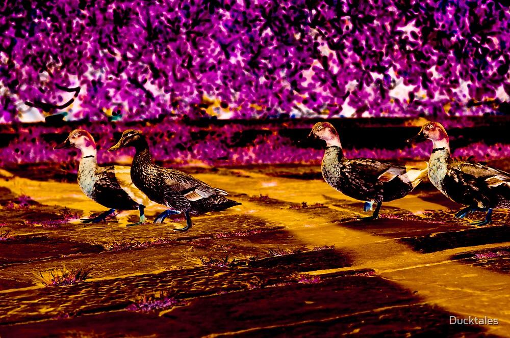 Duck Walk by Ducktales