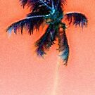 Glowing Palm by Holly Martinson