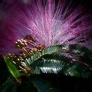 Purple Flower by Dave Cauchi