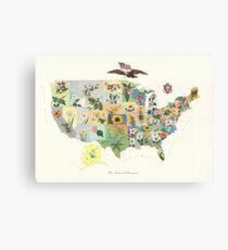 Vintage US-Staatsblume Karte (1911) Leinwanddruck