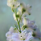 Blue Delphiniums by AnnieD