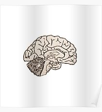 hemisected brain Poster