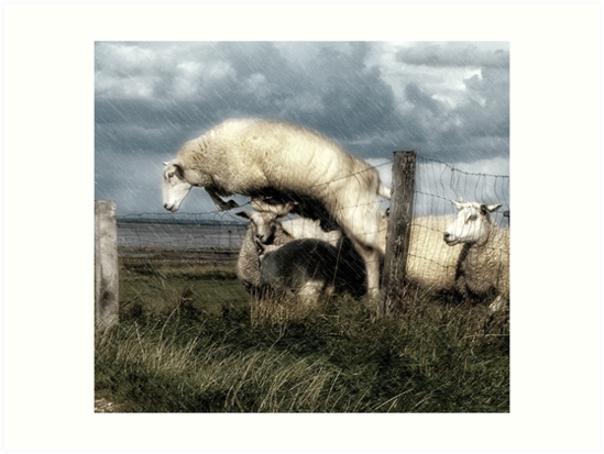 The woolly jumper by Alan Mattison