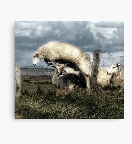The woolly jumper Canvas Print