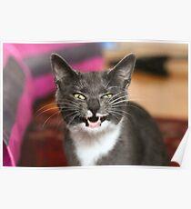 Goofy kitten Poster