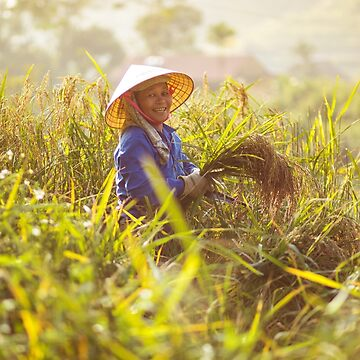 A local rice field worker in Vietnam by clemphoto