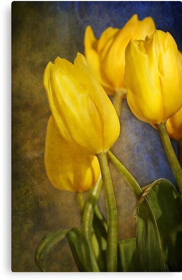 Katie's Tulips by Holly Cawfield