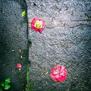 Fallen camellia flowers by sil63