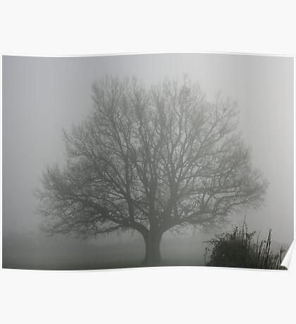Oak Tree in the Fog Poster