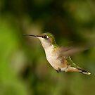 hummingbird by J.K. York