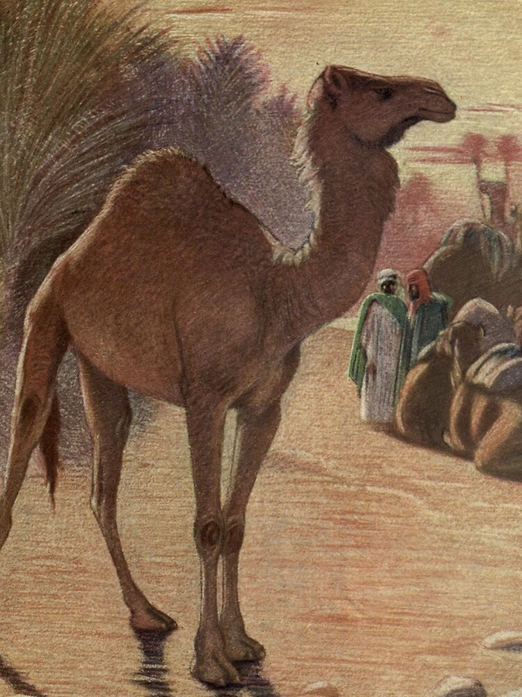 Vintage Camel Painting (1909) by BravuraMedia