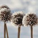 Frosted Cones by lorilee