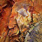Natures Wonders by Dmarie Becker