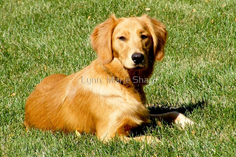 Time For A Break After Running Around The Yard! by Marie Sharp