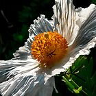 Fried Egg Flower by Dave Rollins