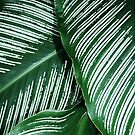 Green Tropical Leaves with White Stripes Closeup by YLArt