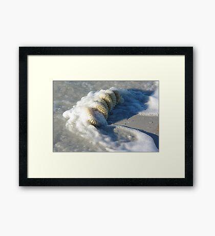 Whelk Egg Case Framed Print