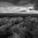 Across the Dunes, Brancaster by David Hawkins-Weeks