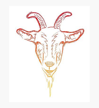 goat sketch Photographic Print