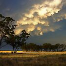 Enlightened Plain by David Haworth