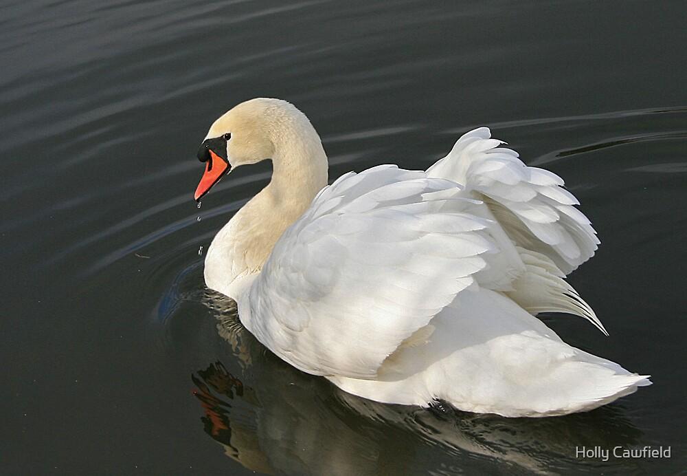 Arrogant Swan by Holly Cawfield