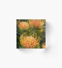 Proteas Acrylic Block