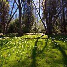 Shadows of Spring by Barbara  Brown