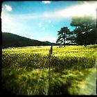 Fence Light by kiloroam