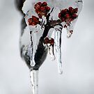 Iced by LizzieMorrison