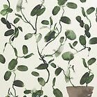 Hoya Carnosa / Porcelainflower by Arell
