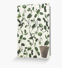 Hoya Carnosa / Porcelainflower Greeting Card