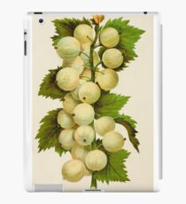 Canadian Horticulturalist 1888-96 - Downing Gooseberries iPad Case/Skin