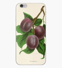 Canadian Horticulturalist 1888-96 - Fellemburg Plums iPhone Case