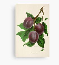 Canadian Horticulturalist 1888-96 - Fellemburg Plums Canvas Print