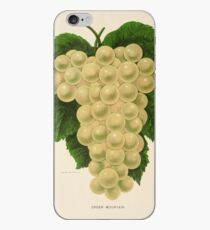 Canadian Horticulturalist 1888-96 - Green Mountain Grapes iPhone Case